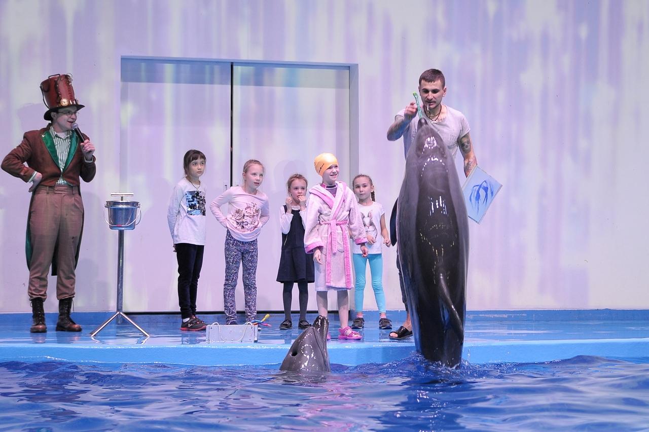 День рождения в дельфинарии