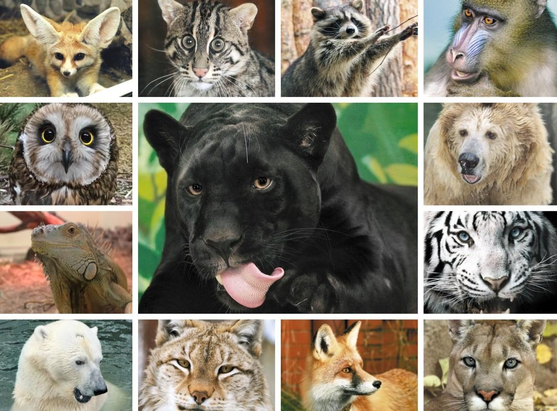 Екатеринбургский зоопарк